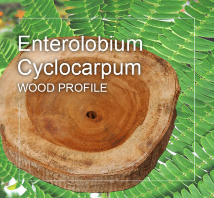 enterolobium cyclocarpum wood profile
