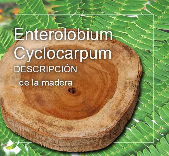 enterolobium cyclocarpum