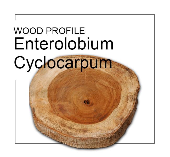 profile enterolobium cyclocarpum wood